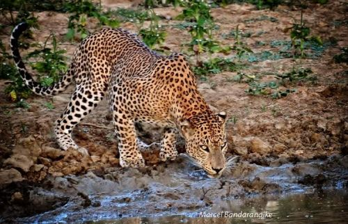 a cautious drink-yala