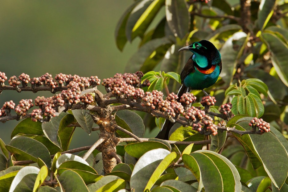 Quetzal Bird Flying Exotic Birds flying ac...