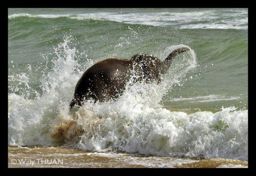 elephant at YALA 1