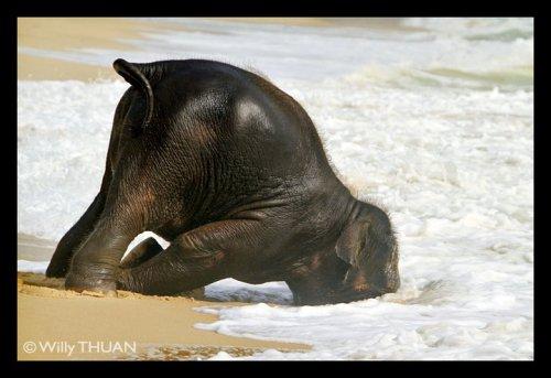 elephant at YALA 22