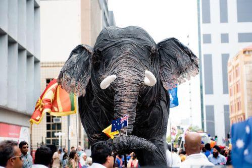 AS elephant