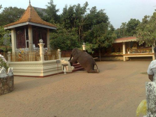 aa-elephant-kneeels