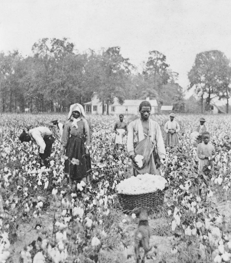 The Plantation Economy in British Ceylon: The Downtrodden ...